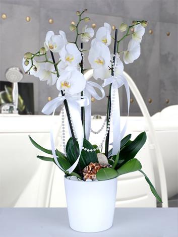 Orkidenin Büyüsü